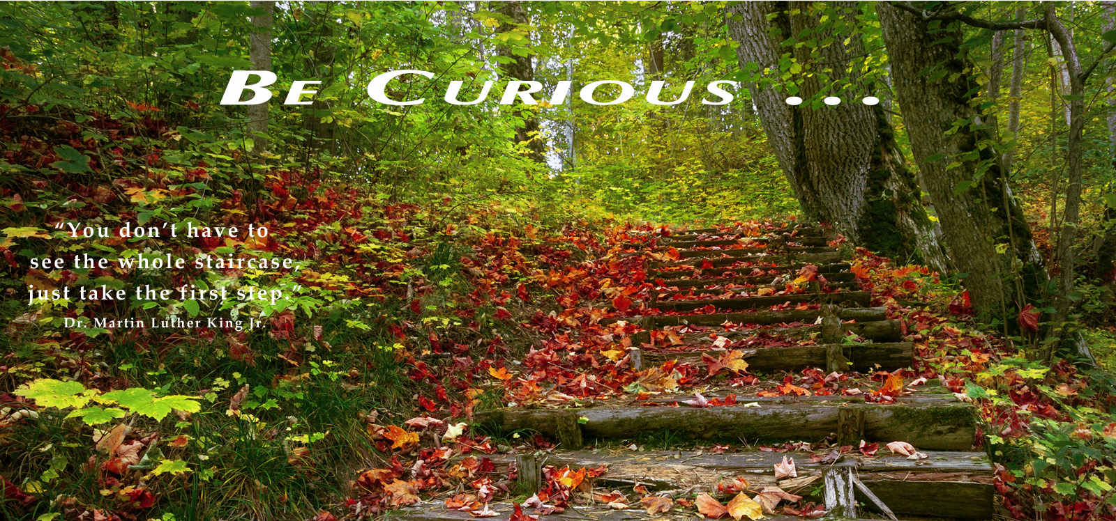 Forest path depicting being curious