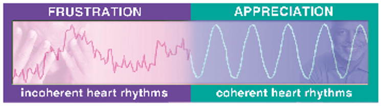 Graphic showing two hearth rhythm signwaves: incoherent and coherent.